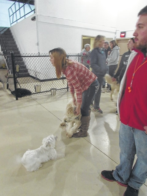 Doggie Daycare In Lima Offers Socialization Training The Lima News