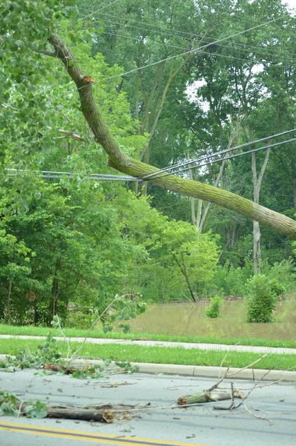 A tree fell onto a powerline at 9 a.m. Thursday at Locust Street in Ottawa.