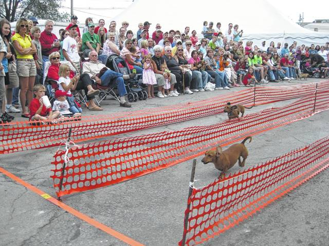 The festival will feature dog races.