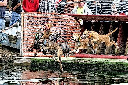 Max's Water Dog Races kicked off Saturday afternoon at the Allen County Fairgrounds.   Levi A. Morman | The Lima News