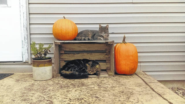 Celebrate cats and fall today.