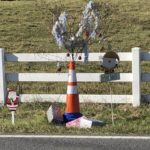 Get This: Christmas 'Cone Weed' loses its cone, much of its weediness