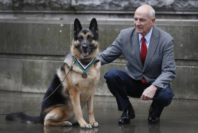 John Wren from New York, who was 4 years old when Chips the family pet dog returned from the war effort, with Military working dog Ayron who received the PDSA Dickin Medal, the animal equivalent of the Victoria Cross, on Chips' behalf, in London, Monday, Jan. 15, 2018. Chips was a US Army dog who protected the lives of his platoon during the invasion of Sicily in 1943. (AP Photo/Kirsty Wigglesworth)
