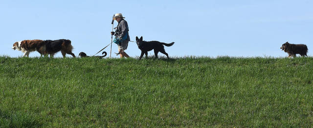 Bob Martinez of Lima, takes is five dogs named, Macie, Cooper, Bentley Cruz and Riley for a walk on top of the Ferguson Reservoir on Wednesday morning. Martinez walks the dogճ everyday except when it rains.