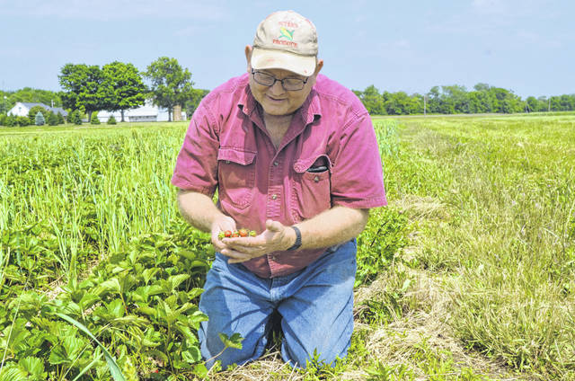 Suter's Produce co-owner Jerry Suter describes the damage caused from thrips eating his strawberry patches during the 2018 straweberry season.