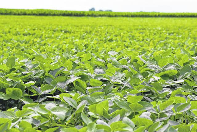 Soybean farmers in Ohio stand to lose the most if the China tariffs are enacted.