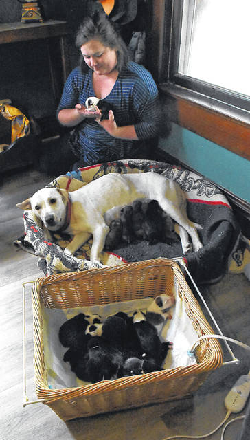 Puppy love: Dog delivers litter of 19 - The Lima News