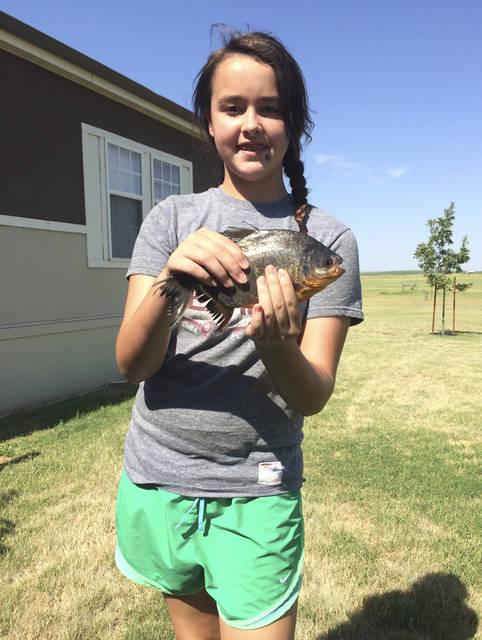 In this July 22, 2018 photo provided by the Oklahoma Department of Wildlife Services, Kennedy Smith, of Lindsay, Okla, holds a pacu, a native South American fish she caught in a southwestern Oklahoma lake in Caddo County, Okla. Game Warden Tyler Howser said the pacu is considered an invasive species and was destroyed. (Tyler Howser/Oklahoma Department of Wildlife Services via AP)