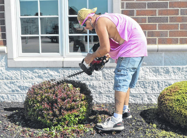 Croy's Mowing LTD employee Derrick Okuly trims hedges at the Putnam County District Library on 136 Putnam Parkway.