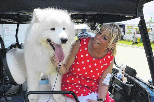 Marvel, a 2 1/2-year-old Samoyed, won best in breed at the Western Ohio Summer Cluster All-Breed Dog Show Sunday. He's pictured with owner Mary Morton Augustus.