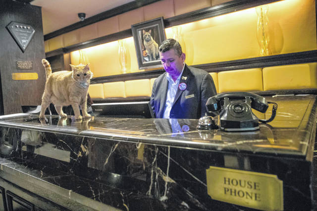 On Thursday, Aug. 2, 2018 photo, Hamlet VIII walks past Edwin Garcia as he works the front desk at the Algonquin Hotel in New York.